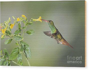 Wood Print featuring the photograph Rufous-tailed Hummingbird by Dan Suzio