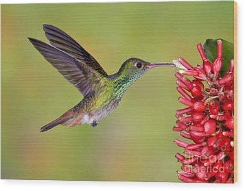 Rufous-tailed Hummingbird Wood Print by Anthony Mercieca