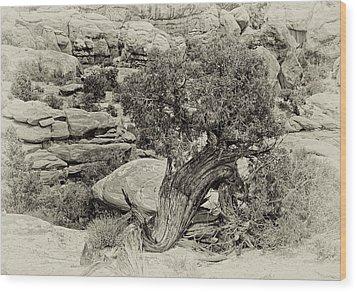 Rugged Tree Wood Print