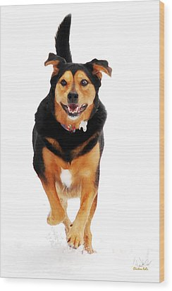 Running Dog Art Wood Print by Christina Rollo