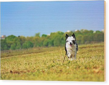 Running Dog Wood Print by Daniel Precht