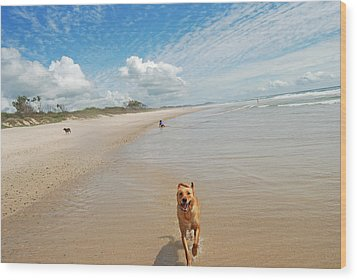 Wood Print featuring the photograph Running Free 3 by Ankya Klay
