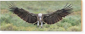Ruppells Griffon Vulture Gyps Wood Print by Panoramic Images