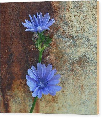 Rustic Bloom Wood Print by Tom Druin
