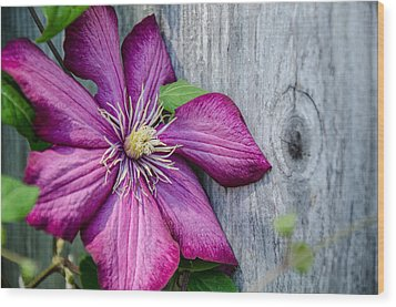 Wood Print featuring the photograph Rustic Clematis by Susan  McMenamin