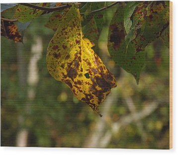 Wood Print featuring the photograph Rusty Leaf by Nick Kirby