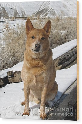 Rusty - Red Heeler Wood Print