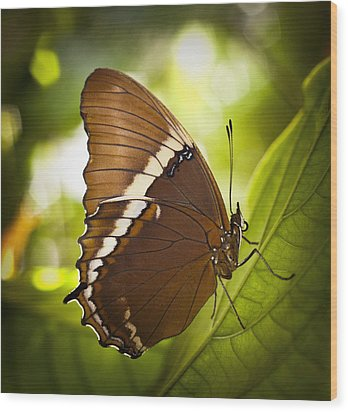 Wood Print featuring the photograph Rusty Tip Butterfly by Bradley R Youngberg