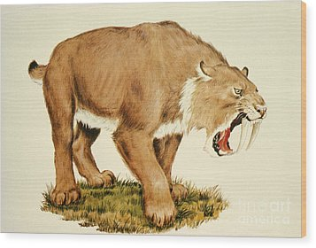 Sabretooth Cat Wood Print by Tom McHugh