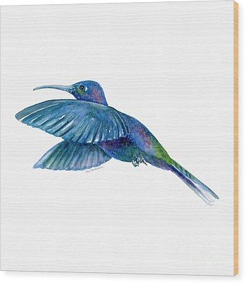 Sabrewing Hummingbird Wood Print by Amy Kirkpatrick