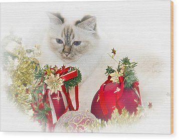 Sacred Cat Of Burma Christmas Time II Wood Print by Melanie Viola
