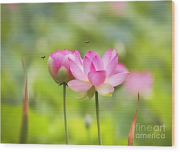 Sacred Lotus Wood Print by Bill  Robinson