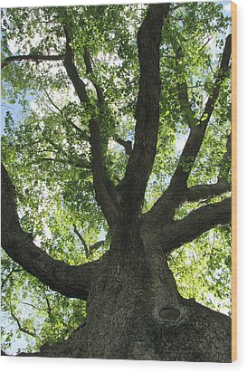 Sacred Oak Wood Print by Melissa Stoudt