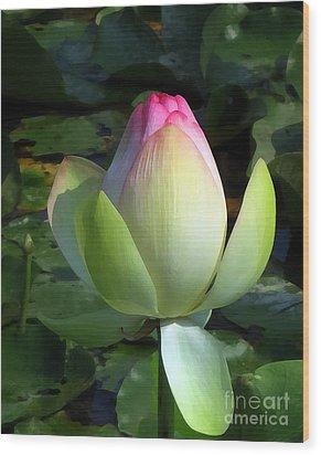 Sacred Tulip Lotus Wood Print by Patricia Januszkiewicz