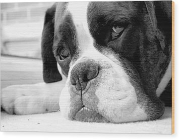 Sad Boxer Dog Wood Print