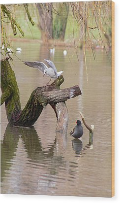 Safe Landing Wood Print by Theresa Selley