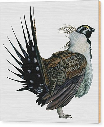 Sage Grouse  Wood Print by Anonymous