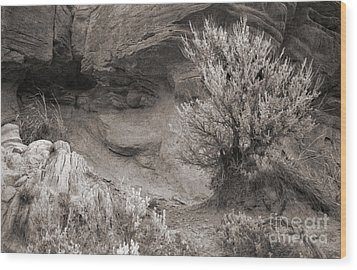 Sagebrush On Polecat Bench Wood Print by Janeen Wassink Searles