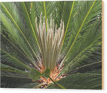 Sago Palm In Bloom Wood Print by Rebecca Cearley
