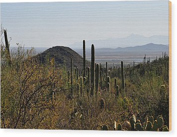 Saguaro Cactus And Valley Wood Print by Diane Lent