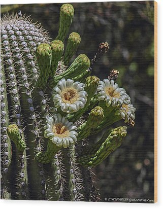 Wood Print featuring the photograph Saguaro Flowers by Elaine Malott