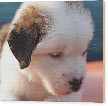 Saint Bernard Puppy Wood Print by Mechala  Matthews