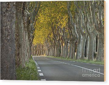 Saint Remy Trees Wood Print by Brian Jannsen