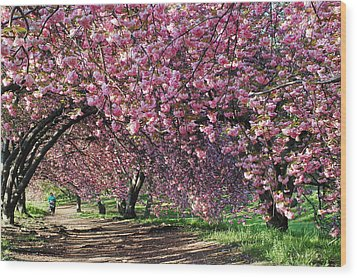 Wood Print featuring the photograph Sakura In Central Park by Yue Wang