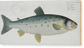 Salmon Wood Print by Andreas Ludwig Kruger