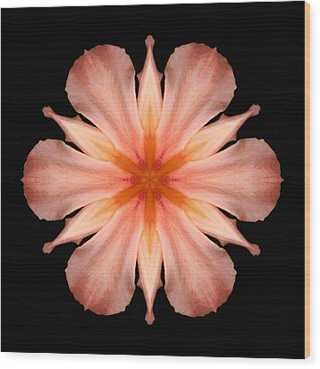 Salmon Daylily I Flower Mandala Wood Print by David J Bookbinder