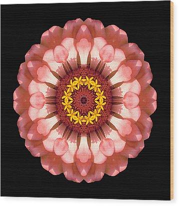 Salmon Zinnia Elegans Iv Flower Mandala Wood Print by David J Bookbinder