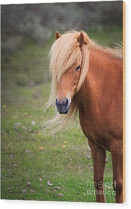 Salon Perfect Pony Wood Print by Peta Thames