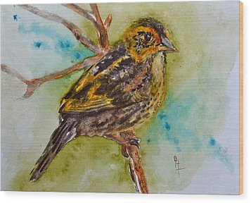 Saltmarsh Sparrow Wood Print by Beverley Harper Tinsley