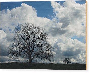 Same Tree Many Skies 13 Wood Print