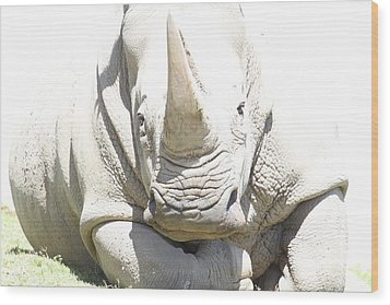 San Diego Zoo - 1212180 Wood Print by DC Photographer