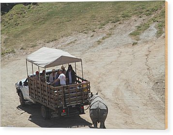 San Diego Zoo - 1212259 Wood Print by DC Photographer