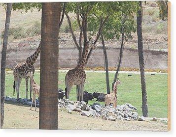 San Diego Zoo - 1212296 Wood Print by DC Photographer