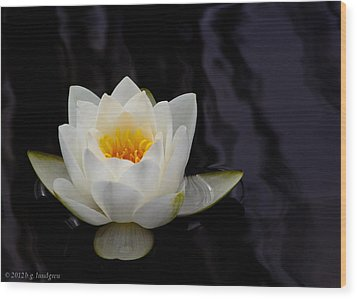San Francisco Water Lily Wood Print by Bruce Lundgren
