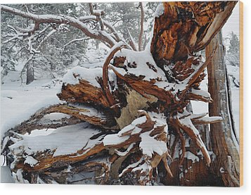 Wood Print featuring the photograph San Jacinto Fallen Tree by Kyle Hanson
