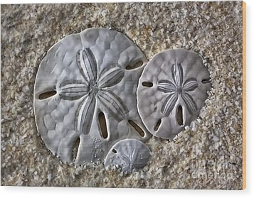 Sand Dollars 2106 Wood Print by Walt Foegelle