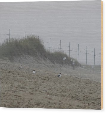 Sand Dunes And Seagulls Wood Print by Cathy Lindsey