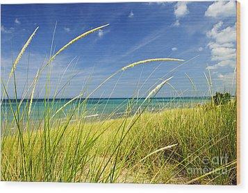 Sand Dunes At Beach Wood Print by Elena Elisseeva