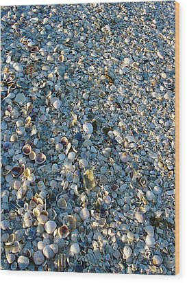 Wood Print featuring the photograph Sand Key Shells by David Nicholls