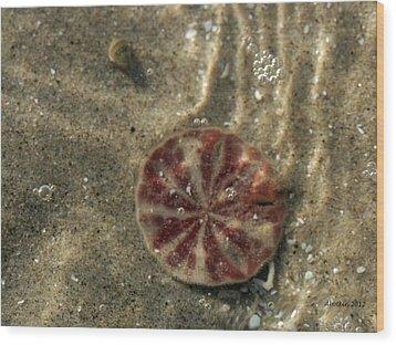 Sand Peso Wood Print