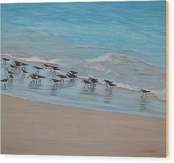 Sand Piper On Parade Wood Print