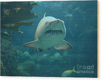 Wood Print featuring the photograph Sand Shark by Robert Meanor