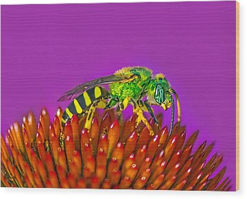Wood Print featuring the photograph Sand Wasp by Marion Johnson