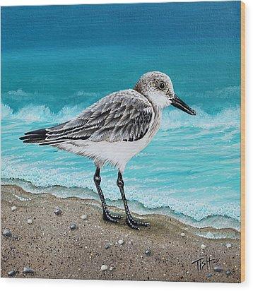 Sanderling Wood Print by Tish Wynne