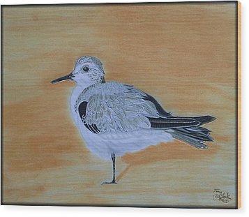 Sanderling Wood Print by Tony Clark