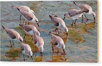 Sanderlings At Alamitos Bay Wood Print by Timothy Bulone